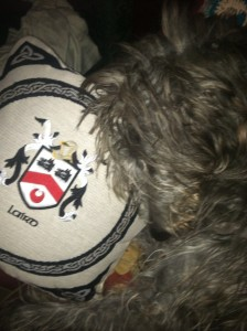 "Raebert thinks the Laird coat of arms is just a pillow. He hasn't read the 'Spero Meliora' motto. ""I hope for better things."" But he's just a dour Scot"